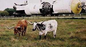 Neben dem NASA Space Center bietet Houston interessante und teils bizarre Sehenswürdigkeiten