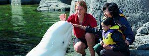 Ein Familienurlaub in British Columbia und gemeinsam Attraktionen wie das Vancouver Aquarium entdecken