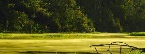 Suriname: Unterwegs im tiefsten Dschungel