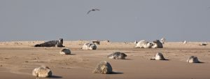 Seehunde am Strand & Der Nationalpark Wattenmeer