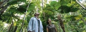 Queensland: Mystischer Regenwald bei Port Douglas