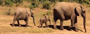 Südafrika: Erlebnis Garden Route