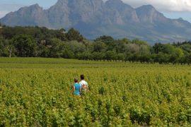 Suedafrika Stellenbosch
