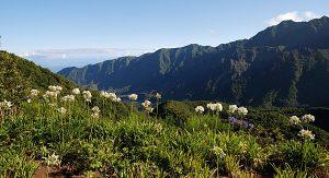 Madeira besticht mit imposanten Schluchten und idyllischen Landschaften