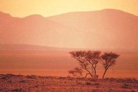 Namibia Steppe