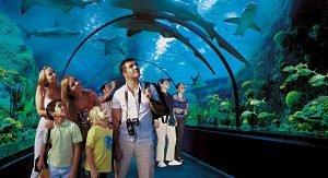 Teneriffa bietet zahlreiche Attraktionen für Familien wie den Loro Park mit seinem Haitunnel