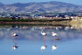Herrlich: Beobachten der Flamingos am Salzsee von Larnaka