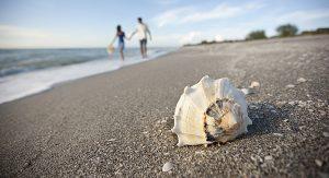 Captiva Island: Shelling – Muschelsammeln – ist eine beliebte Aktivität für Strandläufer und Naturliebhaber