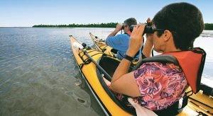 Toll: Eine Kajak-Tour auf dem Great Calusa Blueway Paddelweg führt Urlauber zu kleinen, einsamen Buchten