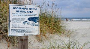 Natur pur bieten die Strände auf Cumberland Island. Schildkröten kommen her, um ihre Eier zu vergraben