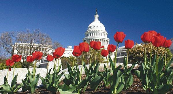 Washington D.C. beeindruckt USA-Urlauber mit vielen imposanten Gebäuden, zum Beispiel dem Capitol