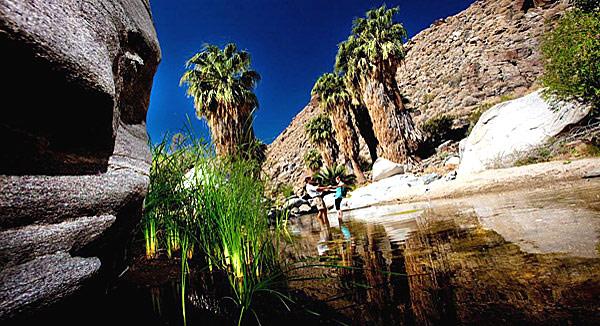 Die Canyon-Oasen der Indian Canyons im kalifornischen Palm Springs locken Naturliebhaber und Wanderer