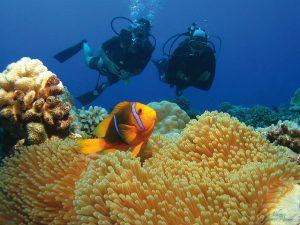 Tahiti Fische