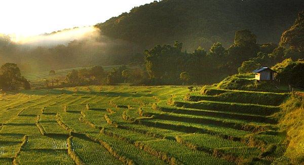 Thailand Reisterrasse
