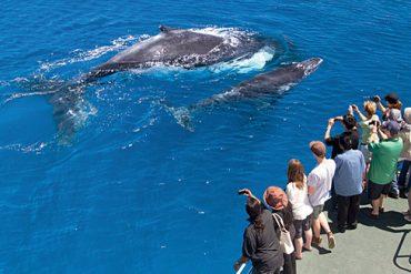 Westaustralien Wale