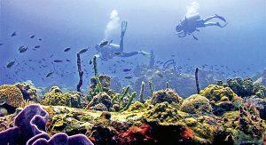Dominicas bunte Unterwasserwelt zieht Taucher weltweit an (Bild: Discover Dominica Authority)
