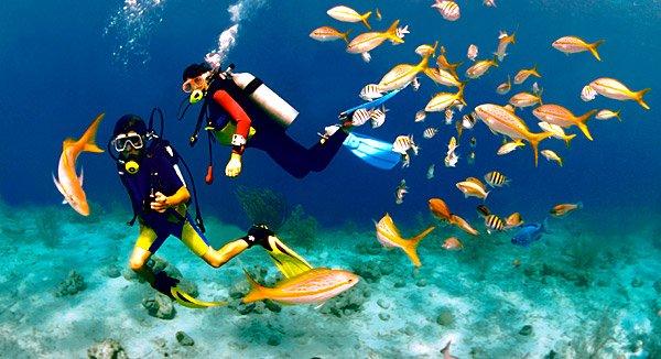 Die karibische Insel Bonaire bietet Urlaubern zahlreiche herrliche Tauchspots
