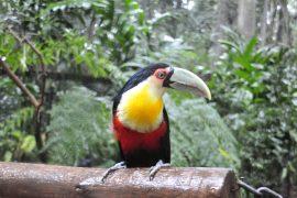 Exotische Tiere in freier Wildbahn erleben - ein Trip nach Brasilien macht es möglich.