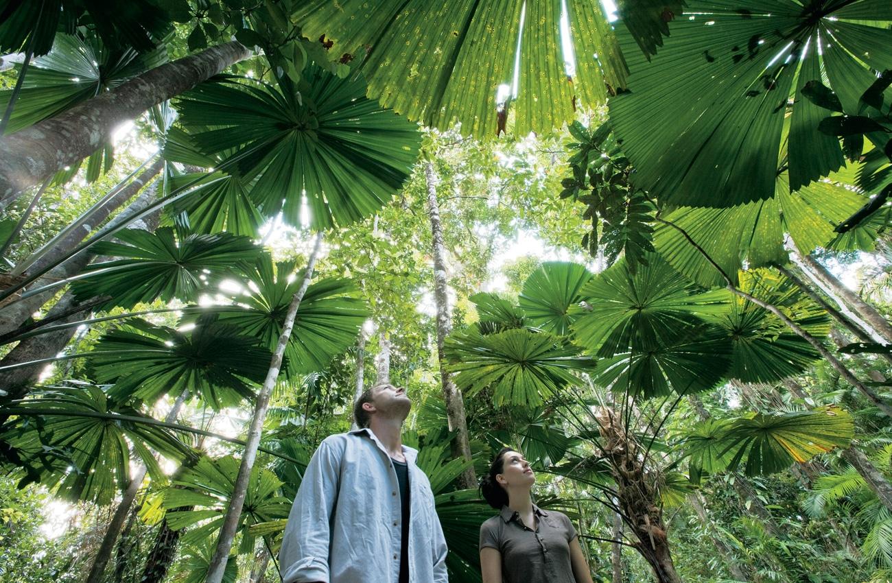 Den Regenwald in Queensland mal ganz anders erleben
