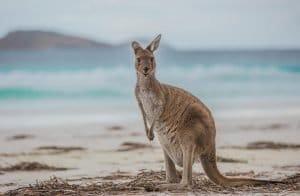 Zu Besuch im Land der Kängurus