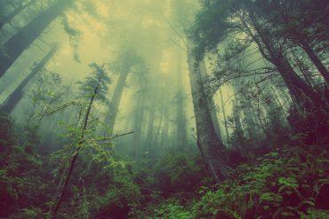 Unberührte und verwunschende Natur