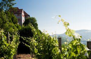 Die Weinberge und Schlösser von Dornburg an der Saale sind idyllischer Abstecher vom Lutherweg zwischen Apolda und Jena.