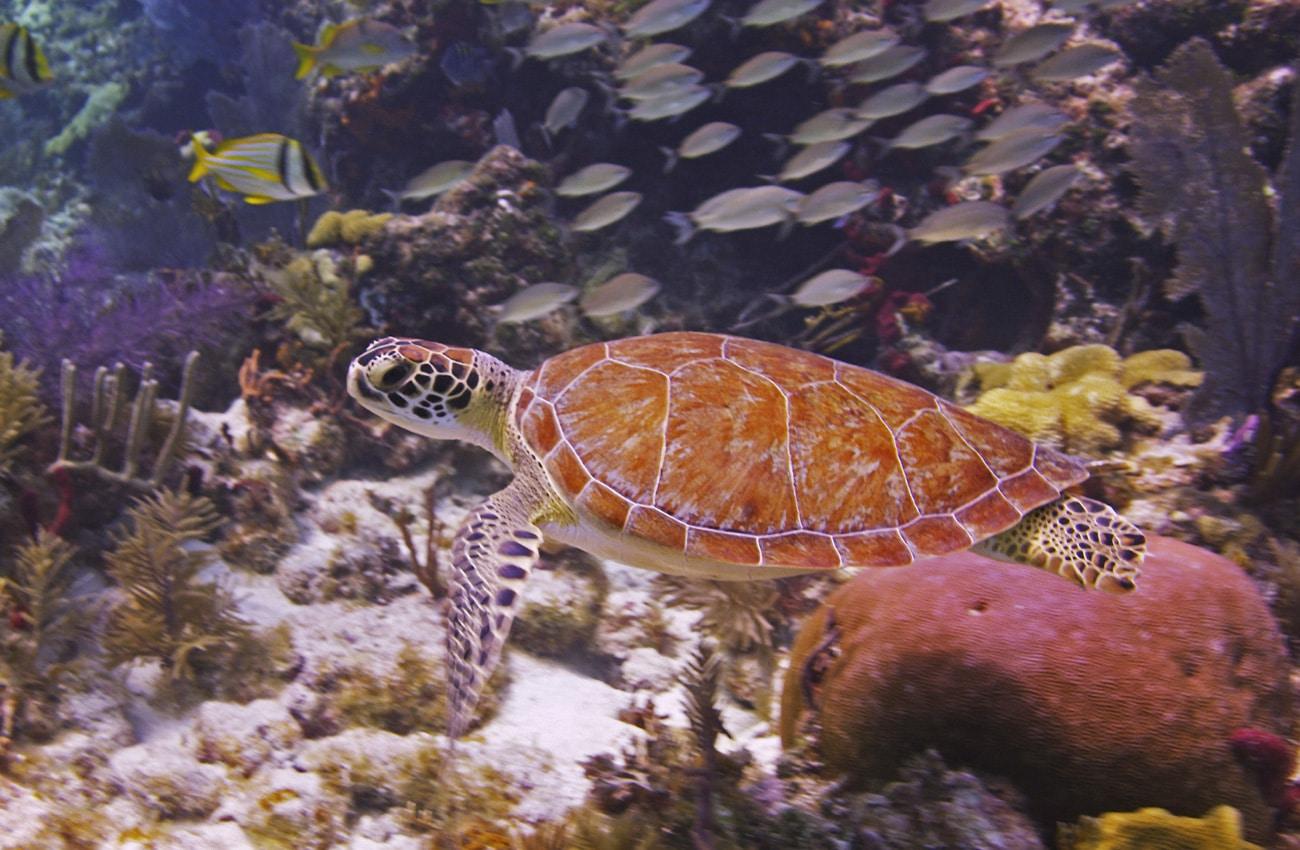 Unterwasserwelt im John Pennekamp Coral Reef State Park