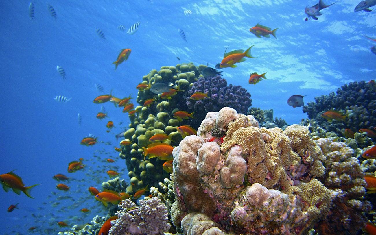 Faszinierende Unterwasserwelt im Roten Meer
