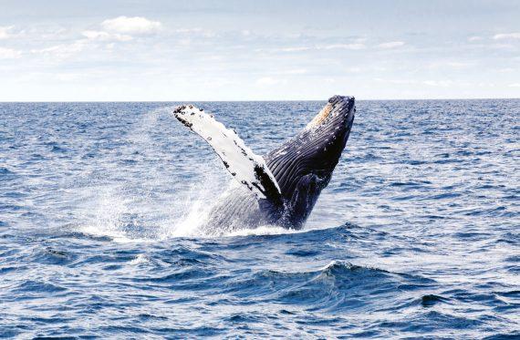 Wale sind beeindruckende Meeressäuger