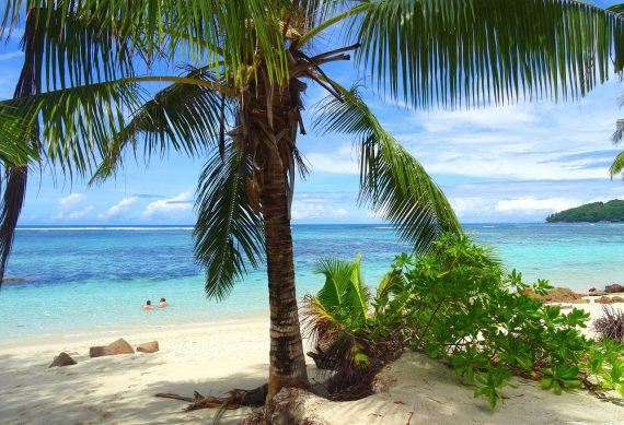 Lange weiße Sandstrände, Palmen und glasklares Wasser - so erfüllen die Seychellen jede Vorstellung vom Paradies