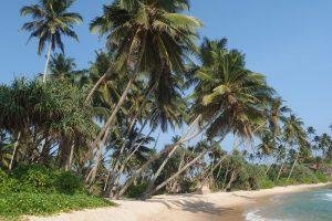 Palmen, Traumstrand und blaues Meer - Sri Lanka ist ein Urlaubs-Juwel.