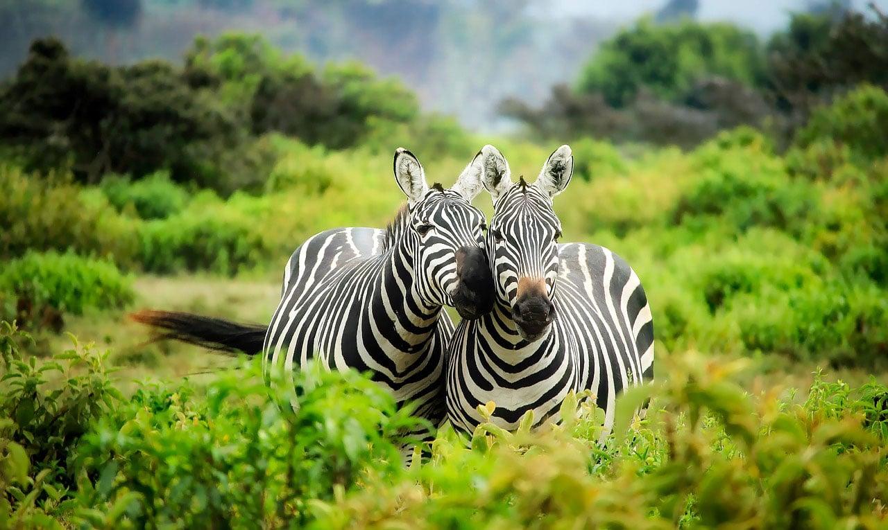 Kenia - wie geschaffen für eine gelungene Urlaubskombination aus entspannendem Badeurlaub und erlebnisreicher Safari.