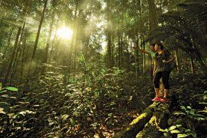 Regenwald - Johor Malaysia