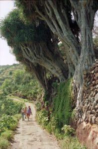 La Palma Wandertipps