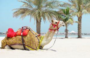 Hurghada liegt direkt an der ägyptischen Küste des Roten Meeres