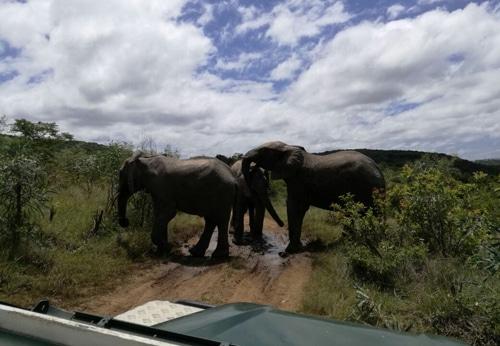 Elefantenpark Suedafirka Eastern Cape