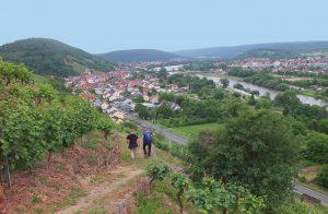 Rotweinwanderweg in Klingenberg