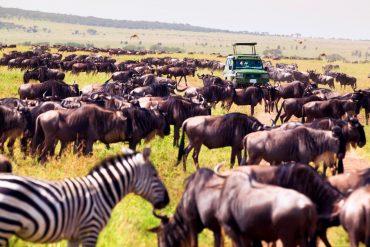 Wilde Tierherde mit Zebra