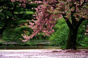 Park in Tokyo
