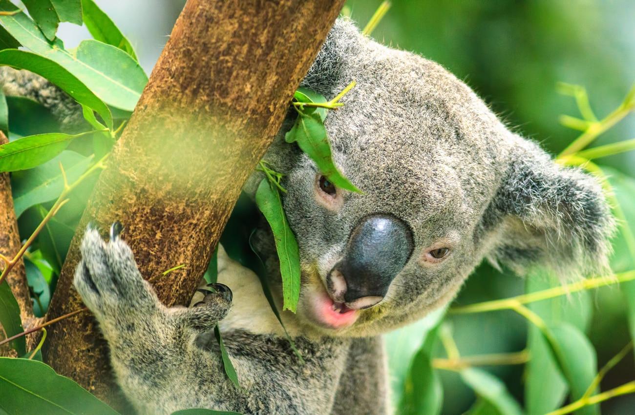 Australien - Die schönsten Lodges