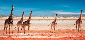 Namibia - Clever reisen!