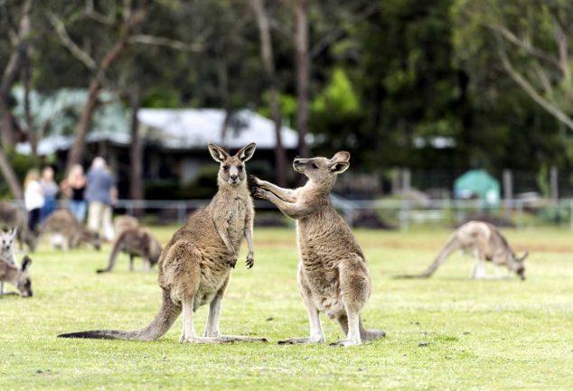 Victorias Wildlife Touring Route