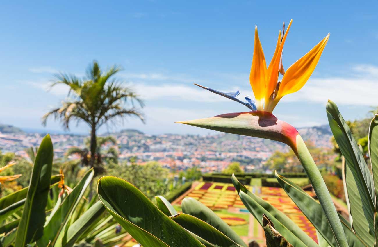 Madeira Blumenparadies